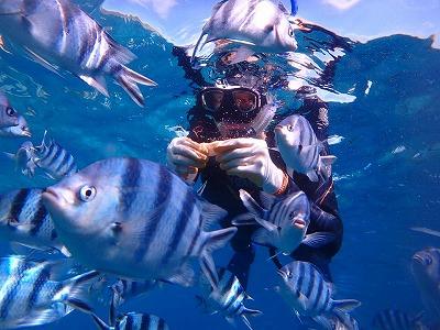 こんな近くでお魚とご対面!沖縄のシュノーケリング体験が、最高の思い出になりました!