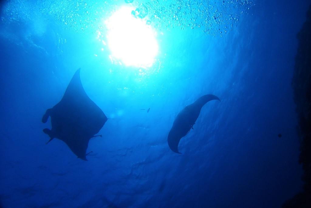 石垣島ダイビング