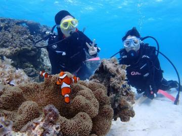沖縄は12月でも泳げる!石垣島ダイビングアクティビティ!
