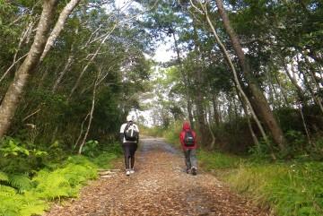 暑くない今がおすすめ!沖縄の自然を歩く!